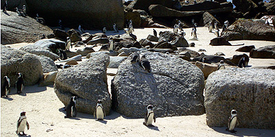 Pinguine an Boulders Beach