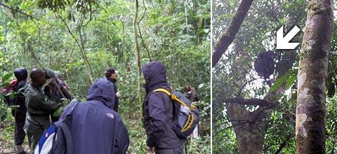 Die Besucher verstecken sich in Regenjacken, der Schimpanse versteckt sich in der Baumkrone oben rechts.