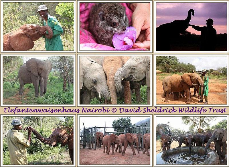 Elefantenwaisenhaus Nairobi © Fotos: David Sheldrick Wildlife Trust