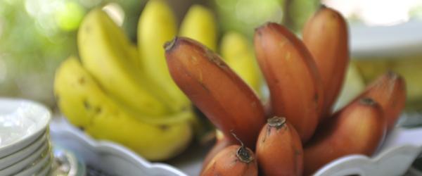 Mto Wa Mbu, Bananen © Foto: Svenja Penzel | Outback Africa Erlebnisreisen