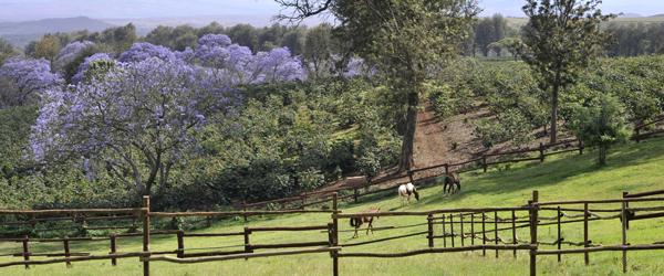 Blick vom The Manor © Foto: Svenja Penzel | Outback Africa Erlebnisreisen