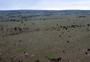 Serengeti © Foto: Svenja Penzel | Outback Africa Erlebnisreisen