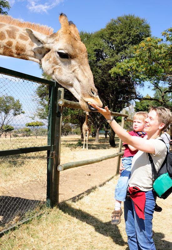 Lion Park in Johannesburg © Foto: Marco Penzel | Outback Africa Erlebnisreisen