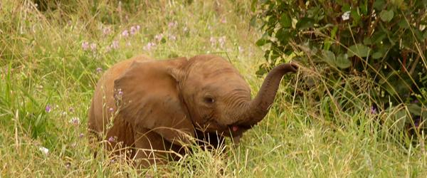 Kleiner Elefant im Tarangire Nationalpark © Foto: Ulrike Pârvu | Outback Africa Erlebnisreisen