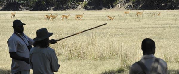 Pirschwanderung mit Jacob (links) bei Nkwali Camp. © Foto: Marco Penzel | Outback Africa Erlebnisreisen