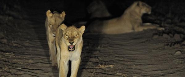Nächtliche Straßensperre im Bsefu-Sekor © Foto: Marco Penzel | Outback Africa Erlebnisreisen