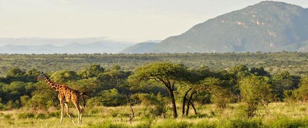 Samburu-Panorama © Foto: Svenja Penzel | Outback Africa Erlebnisreisen