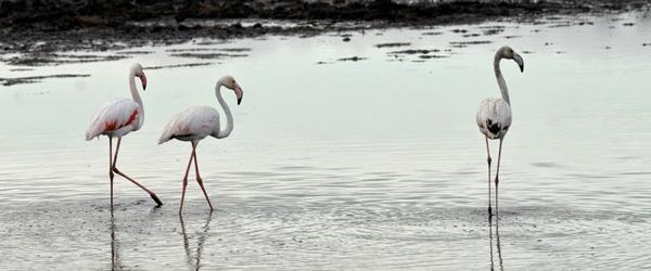 Flamingos am Lake Nakuru © Foto: Svenja Penzel | Outback Africa Erlebnisreisen