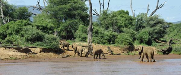 Elefanten am Ewaso Nyiro im Samburu Wildreservat © Foto: Svenja Penzel | Outback Africa Erlebnisreisen