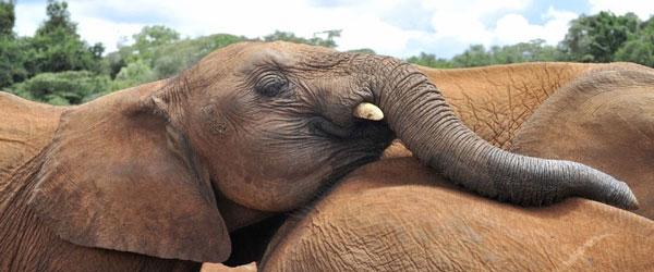 Elefanten zum Anfassen nahe © Foto: Svenja Penzel | Outback Africa Erlebnisreisen