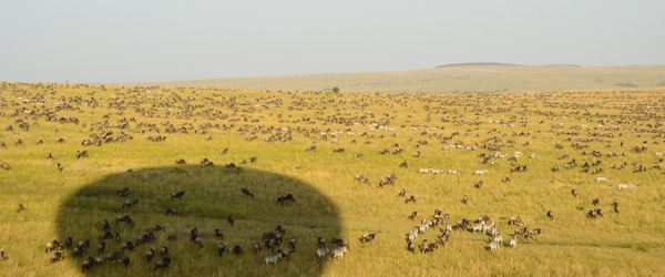 Ballonschatten über Massai Mara © Foto: S.Schlesinger | Outback Africa Erlebnisreisen