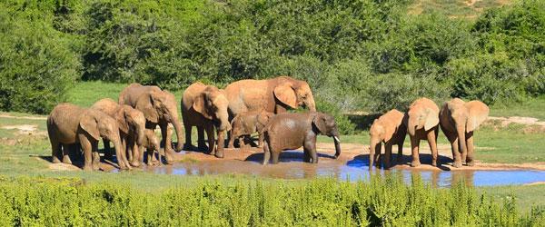 Elefanten am Wasserloch im Addo Elephant Nationalpark © Foto: Doreen Schütze | Outback Africa Erlebnisreisen