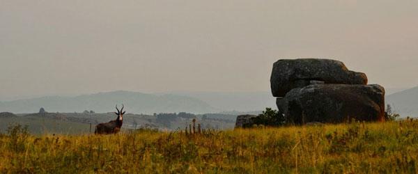 Rappenantilope in Swasiland © Foto: Ines Schulze
