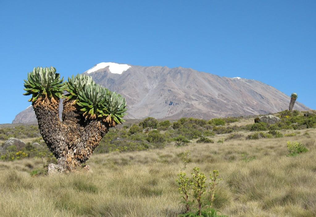 Kilimanjaro © Foto: Deborah Bachmann