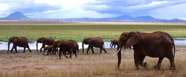 Elefanten im Tarangire Nationalpark © Foto: Judith Nasse | Outback Africa Erlebnisreisen