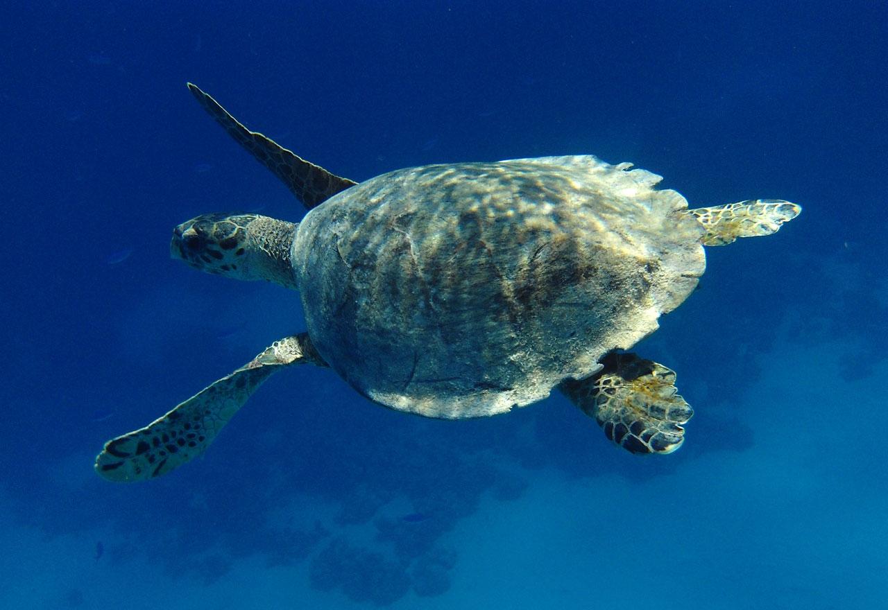 Ziemlich Anatomie Der Meeresschildkröten Bilder - Menschliche ...
