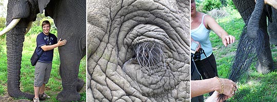 Elephant Experience © Foto: Jens Döring / Outback Africa Erlebnisreisen