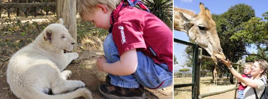 Lionpark, Johannesburg, Südafrika © Fotos: Marco Penzel   Outback Africa Erlebnisreisen