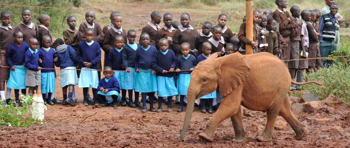 Besuchsstunde im Sheldrick Elefantenwaisenhaus  © Foto: Marco Penzel | Outback Africa Erlebnisreisen