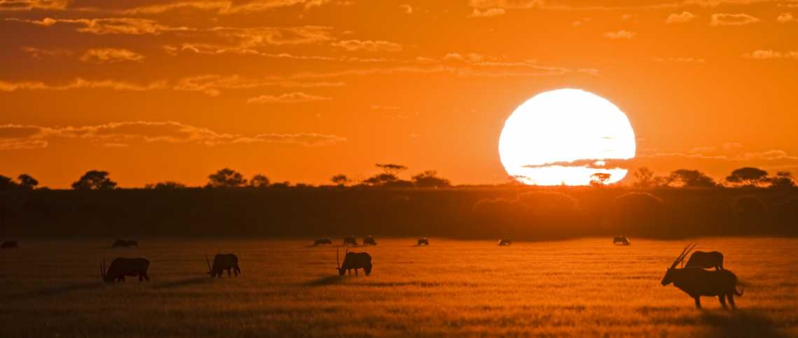 Oryx-Antilopen in der Kalahari  © Foto: Fotofeeling.com