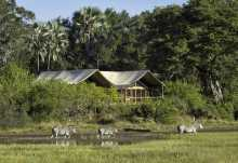 Tubu Tree Camp, Familienzelt  © Foto: Dana Allen | Wilderness Safaris