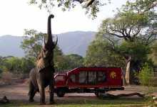 Hoher Besuch am Safari-Truck im Camp in Sambia.  © Foto: Shaun WaringJones