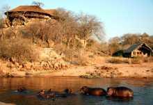 Flußpferde vor der Ruaha River Lodge