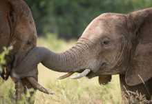 Elefanten im Krüger Nationalpark, Südafrika  © Foto: Bruce Taylor | Sunway Safaris