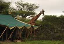Nasikia Central Camp, tierischer Besucher