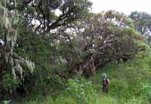 Wanderung mit Ranger im Ngorongoro-Hochland