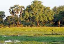 Lower Zambezi National Park, Lagune  © Foto: Marco Penzel | Outback Africa