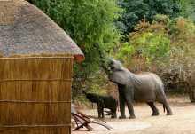 Kaingo Camp, Chalet  © Foto: Shenton Safaris