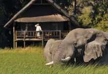 Elefanten vor einem Zelt-Chalet der Khwai River Lodge  © Foto: Philip Schedler