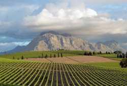 Weinanbau in Stellenbosch vor malerischer Kulisse.  © Foto: Jens Döring | Outback Africa