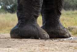 Elefant vor dem Hide der Camelthorn Lodge  © Foto: Ulrike Pârvu | Outback Africa
