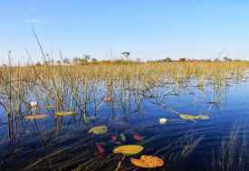 Xudum Camp,  im Okavangodelta  © Foto: Ulrike Pârvu | Outback Africa