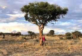 Baumumarmung in Loisaba  © Foto: Svenja Penzel | Outback Africa
