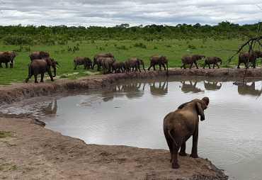 Elefanten am Wasserloch in Hwange  © Foto: Dr Wolfgang Hennig / Rettung bedrohter Wildtiere e.V.