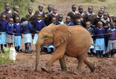 Im Elefantenwaisenhaus von Nairobi  © Foto: Marco Penzel | Outback Africa
