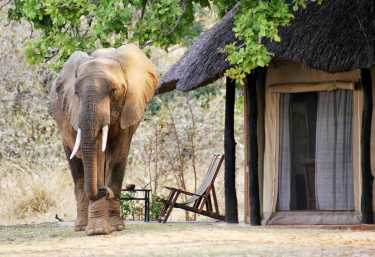 Mchenja Camp, Elefant Im Camp