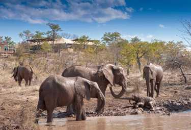 The Elephant Camp  © Foto: Wild Horizons