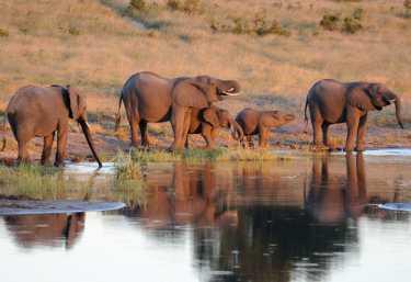 Elefantenfamilie im Hwange Nationalpark.  © Foto: Marco Penzel   Outback Africa
