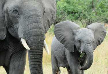 Elefanten im Liwonde Nationalpark  © Foto: Bernd Gerlach