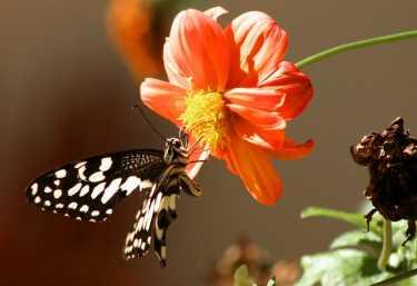Schmetterlin im Kuzikus Wildreservat