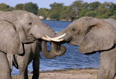 Elefanten im Chobe Nationalpark  © Foto: Doreen Schütze | Outback Africa