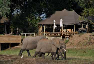 Ruckomechi Camp, Elefanten vor dem Camp  © Foto: Cardo Kleberg für Wilderness Safaris