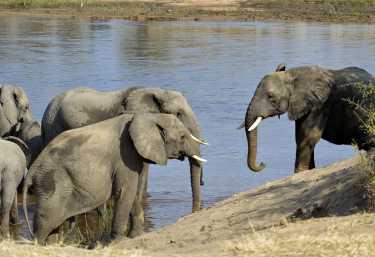 Elefanten im Ruaha Nationalpark  © Foto: Ulrike Pârvu | Outback Africa