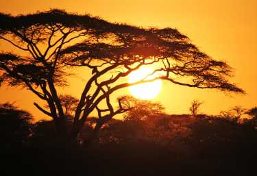 Sonnenuntergang in der Serengeti  © Foto: Wilkinson Tours