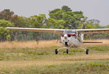 Buschflieger in Busanga, Kafue Nationalpark  © Foto: Marco Penzel | Outback Africa